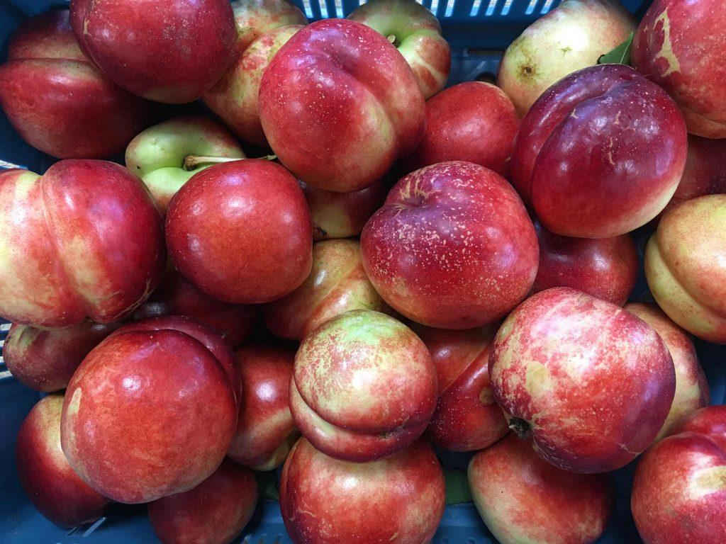 Nahaufnahme von frisch gepflückten Äpfeln