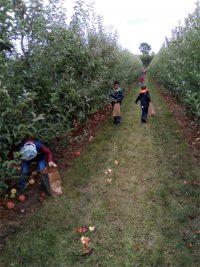 Kinder mit Tüten in der Hand stehen auf dem Apfelfeld und pflücken frische Äpfel