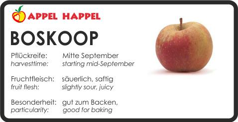 Apfel Boskoop - schmeckt säuerlich und saftig. Pflückreife Mitte September