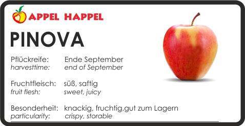 Apfel Pinova - schmeckt süß und saftig. Pflückreife Ende September